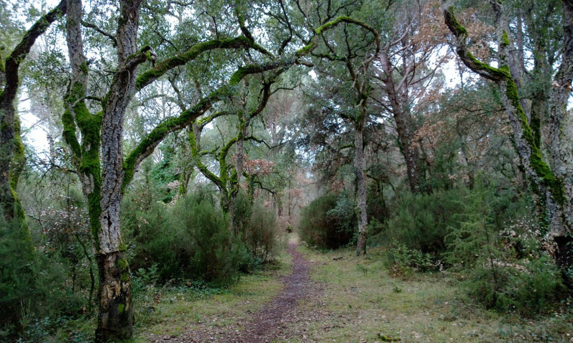 El Bosc Terapèutic de Can Fornaca