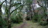 Bosc terapèutic